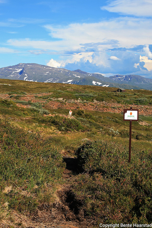 På veg inn i Skarvene og Roltdalen nasjonalpark. Foto: Bente Haarstad
