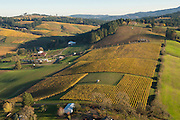 Aerial view over Saffron Fields Vineyard, Yamhill - Carlton, Willamette Valley, Oregon