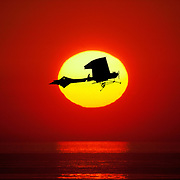 composite photo of vintage monoplane against setting sun