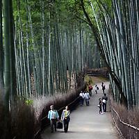 A Day in Arashiyama