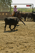 Teenage cowgirl riding quarter horse in cutting horse competition