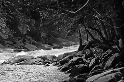 The New River near the New River Gorge Bridge in the New River Gorge National River, West Virginia.