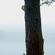 A foggy morning the Boundary Waters in Northern, Minnesota. ..