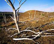 0801-1048 ~ Copyright: George H.H. Huey ~ The skeletons of ohi'a lehue trees along the Devastation Trail, killed by the 1959 eruption of Kilauea Iki.  Hawaii Volcanoes National Park, The Big Island, Hawaii.