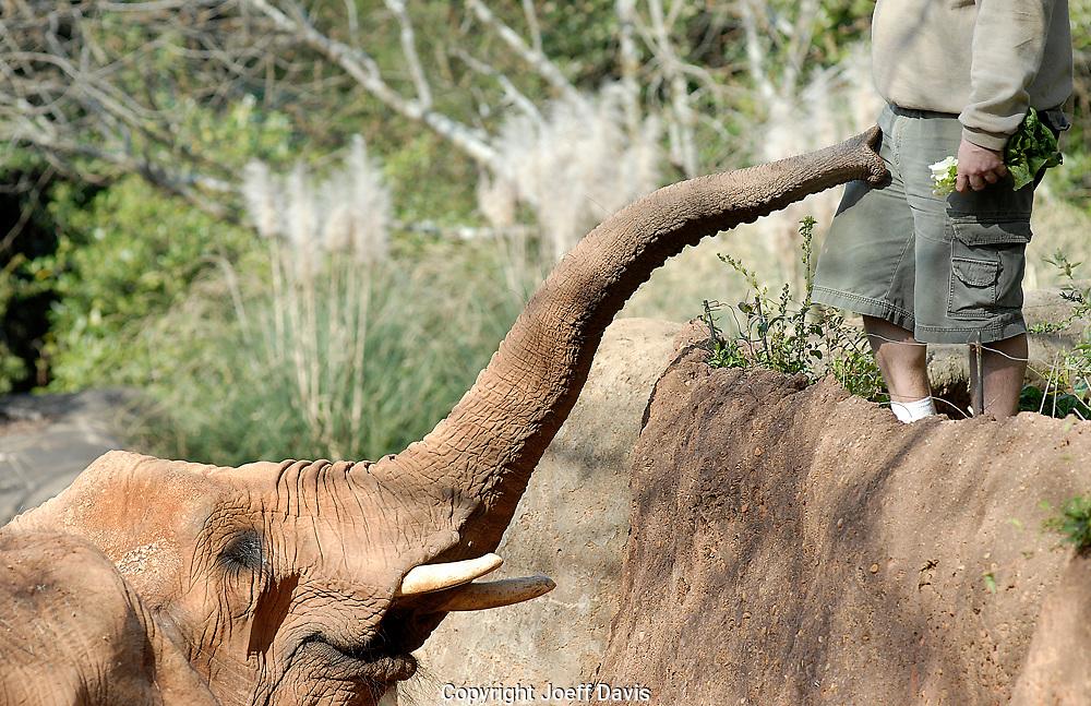 Feeding the elephant at Zoo Atlanta.