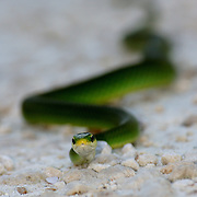 Snakes, Lizards, Reptiles and Amphibians