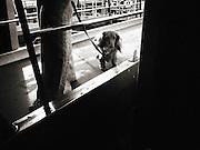 Italy, Venice, Street photography, dog