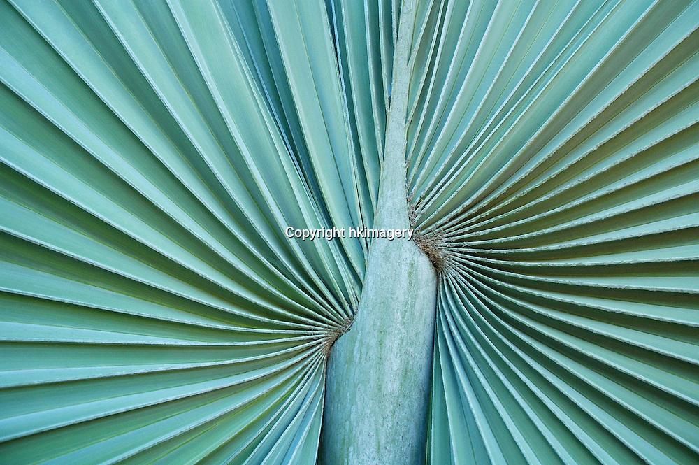 abstract botanical pattern