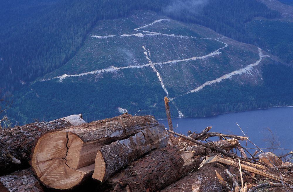 Canada, British Columbia, Clear-cut old growth forest on CANFOR land above Woss Lake on Vancouver Island