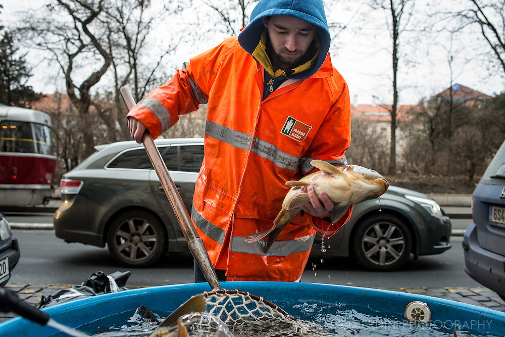 A live carp is fished out of a tub along a busy street in Prague.