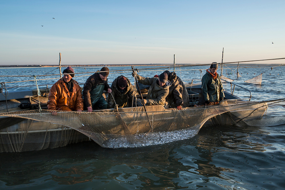 Fishermen gather their catch on the Sea of Azov on Saturday, April 11, 2015 near Siedove, Ukraine.
