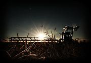 A farmer swaths wheat at sunset, Birch Hills, Saskatchewan, Canada.