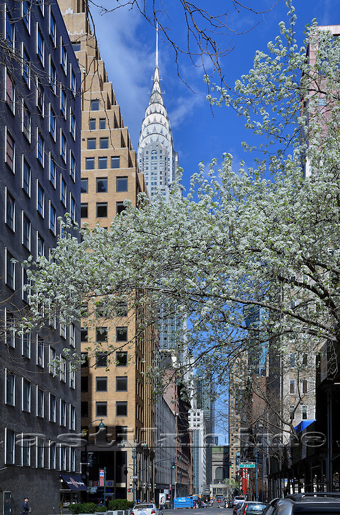 Spring, Chrysler Building, Manhattan, New York City, New York State, USA.