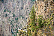 Black Canyon of the Gunnison National Park, trees