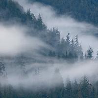 USA, Alaska, Misty Fjords National Monument, Morning fog rolls through rainforest along Rudyerd Bay