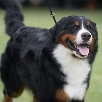 Wine Country Circuit Dog Show 2016