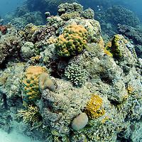 coral reef pinacle Great Barrier Reef, Australia, Pacific Ocean