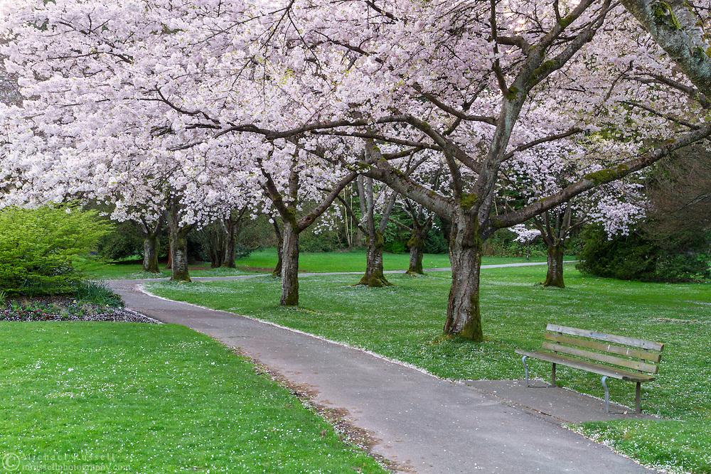 park spring blossom - photo #11