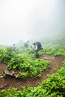 Three hikers going down a steep fog filled trail, Mount Rainier National Park, Washington, USA.
