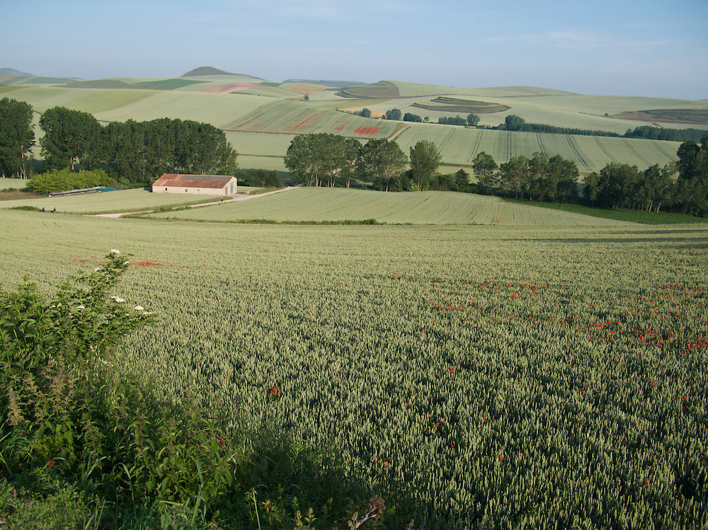 The rolling wheat lands stretched off into the distance. This was the early morning view just after passing into the Castile and Leon region of Northern Spain on the Camino de Santiago. It is near the village of Redecilla del camino.
