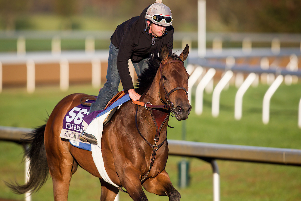 October 29, 2015:   Super Majesty, trained by Jerry Hollendorfer and owned by LNJ Foxwoods, exercises in preparation for the Breeders' Cup Filly & Mare Sprint at Keeneland Race Track in Lexington, Kentucky. Alex Evers/ESW/CSM
