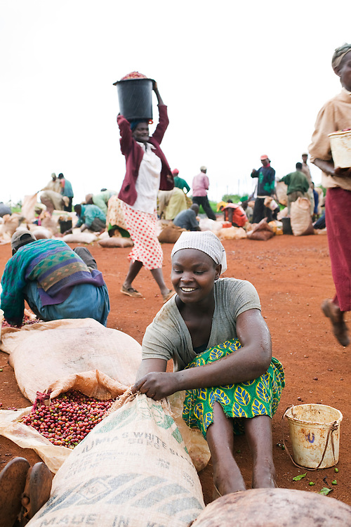 Africa, Kenya, Ruira, (MR) Young woman sorting her Arabica coffee beans after day of picking at Oakland Estates plantation