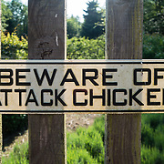 """""""Beware of attack chicken"""" sign on garden fence. Langley, Whidbey Island, Washington, USA."""