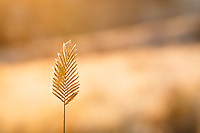 Fall grasses on a frosty Calgary morning<br /> <br /> &copy;2016, Sean Phillips<br /> http://www.RiverwoodPhotography.com