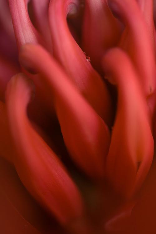 closeup of a water drop on a petal