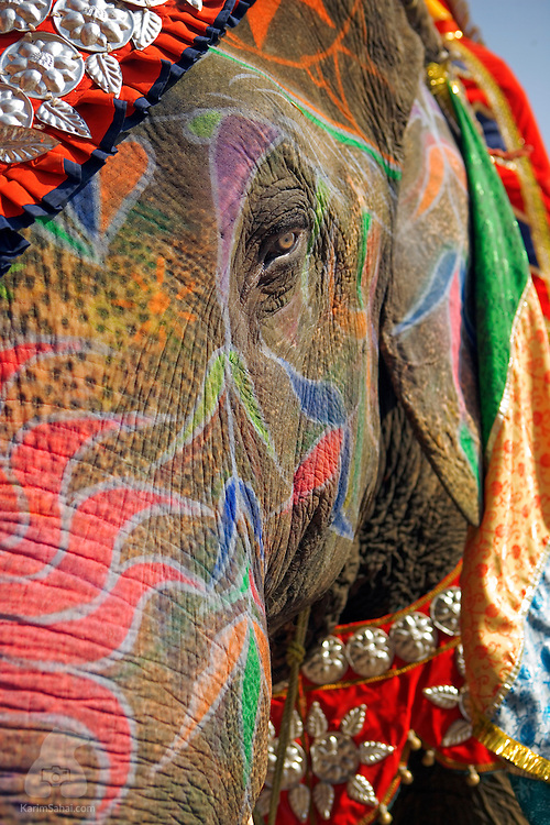 Brightly decorated elephant at the City Palace in Jaipur, Rajasthan, India.