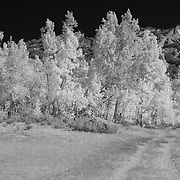 North Lake Road View Wide - Infrared Black & White
