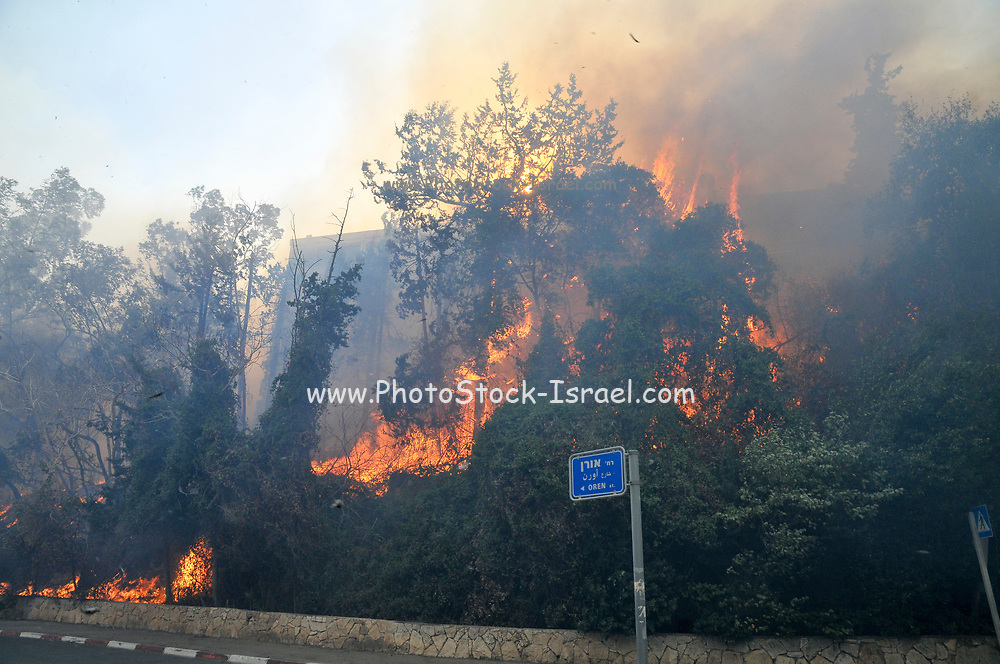 Trees burn in the Wild fire in the city of Haifa, Israel in November 2016