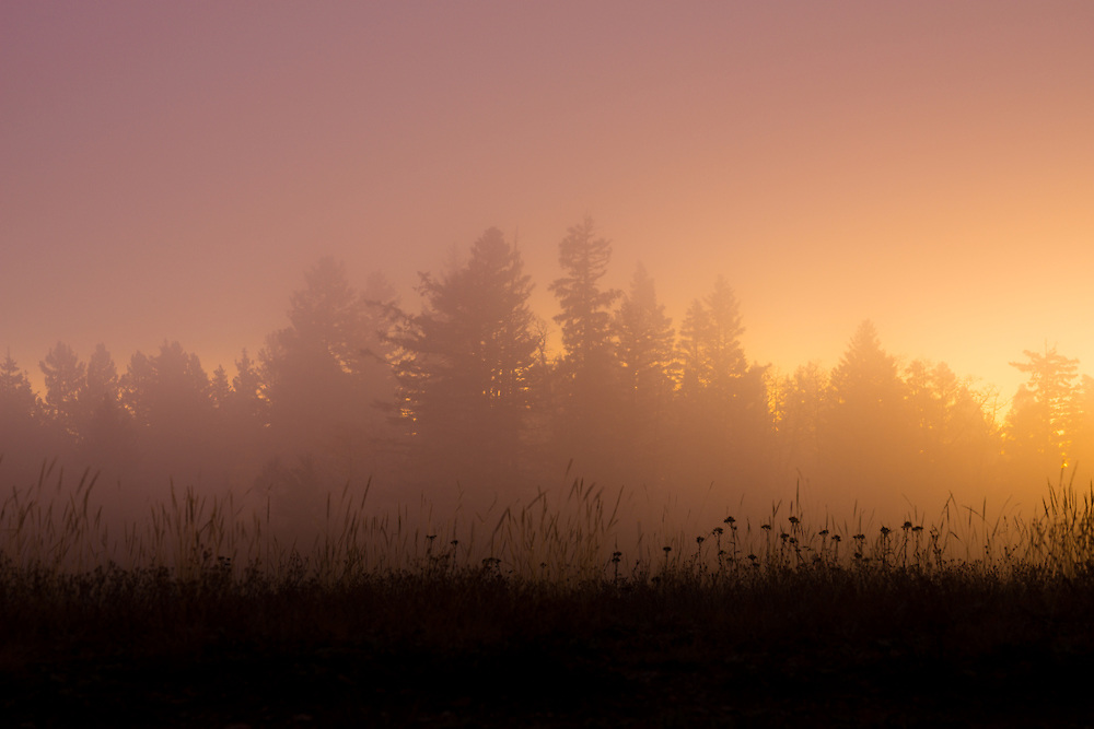 Sunlight pierces through the fog high-atop the Brazos near Chama, New Mexico.