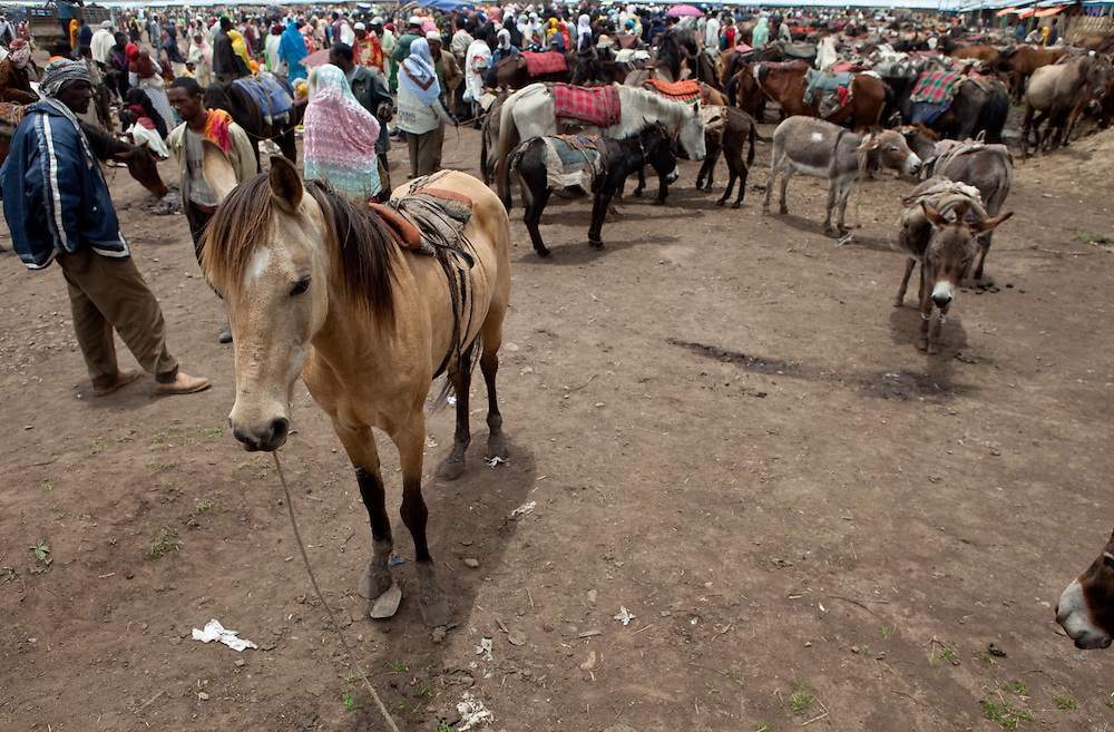 Horses and people crowd at Dinsho market, high in the Bale Mountains of Ethiopia
