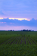 Summertime storm clouds build over the Illinois plains. In the foreground is a fresh green soybean field.