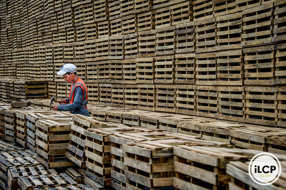 A lobster trap factor in La Ceiba,, ove 40 people are employed by this factory which uses wood from either left over pine planks or sustainable forest. They are having a hard time staying in business because they do things legitimately and they are competing with illegal lobster divers.