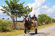 Horse and cart near La Union,  Pinar del Rio, Cuba.