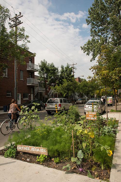 Carré d'arbre-le jardinet des mal-aimées, rue Beaubien et Drolet, arrondissement Rosemont-La Petite-Patrie, Montréal, Québec