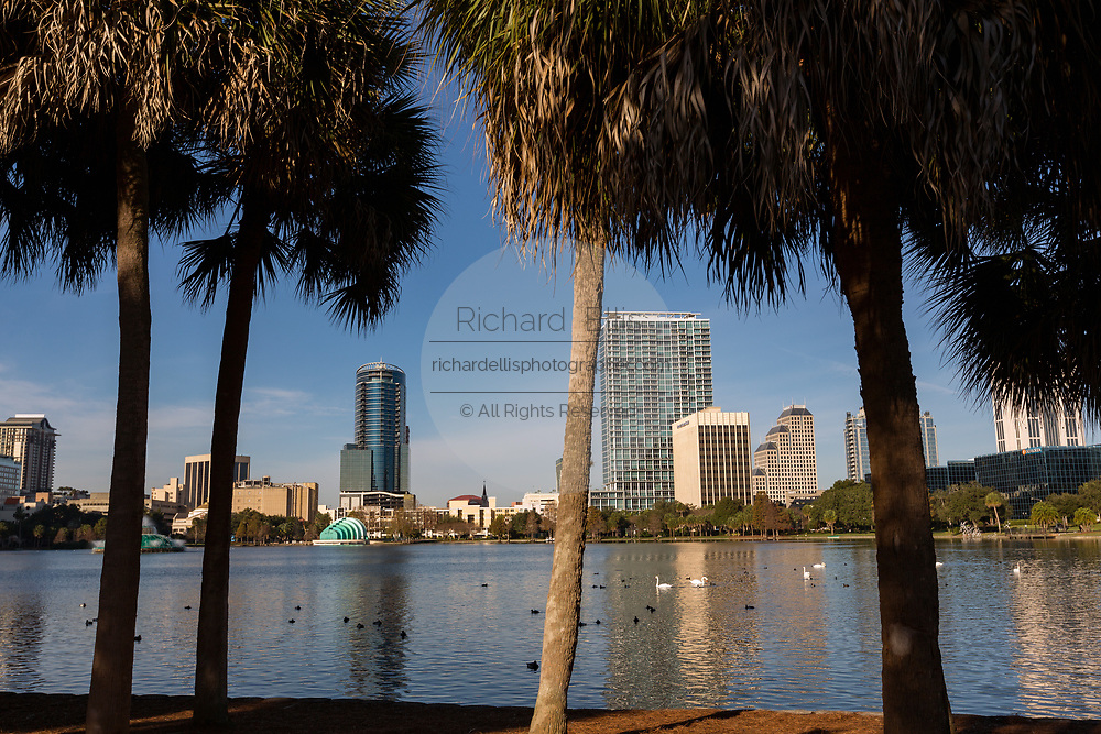 Skyline view over Lake Eola and palm trees in Orlando, Florida. Lake Eola Park is located in the heart of Downtown Orlando and home to the Walt Disney Amphitheater.