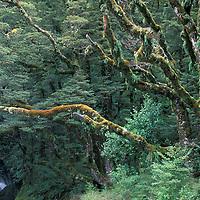 Waterfalls at Robinsons Creek walk, Mt. Aspiring National Park, South Island, New Zealand