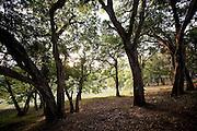 Trees near Kala Wewa. Sri Lanka.