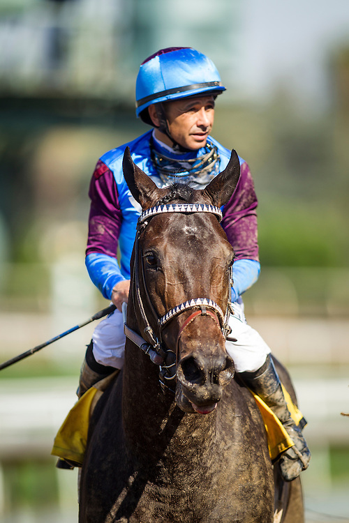 April 04 2015: Bolo and Mike Smith at Santa Anita Park in Arcadia CA. Alex Evers/ESW/CSM