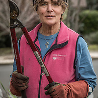 Middletown resident and owner of Star Garden Nursery, Tanya Striedieck, prunes trees in the yard of a home on the corner Cedar and South Oak Streets in Calistoga.
