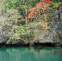 Beautiful trees growing out of the limestone cliffs that surround Big Lagoon in the Bacuit Archipelago , El Nido, Palawan, Philippines.