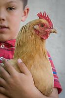 Andreas Bjokman with his chicken, Calistoga
