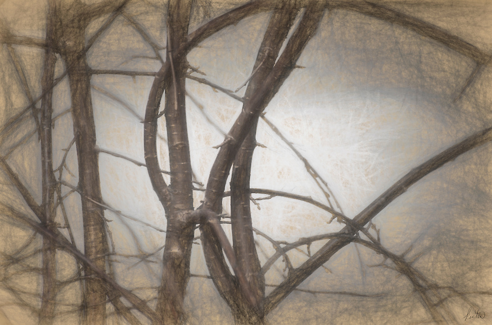 Abstract, mysterious image of trees in a dark. foggy forrest.