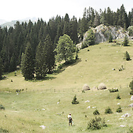 mountain in Durmitor park.There are several arguments about the derivation of the name  &quot;Montenegro&quot;, one of these relates to dark and deep forests  that once covered the Dinaric Alps, as it was possible to see them from the sea. <br />