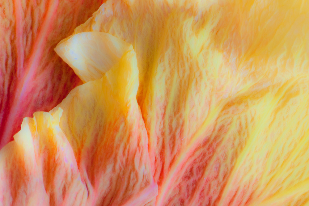Design of Hibiscus flower petals