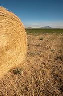 Square Butte, Round Butte, hay field, outside Square Butte Montana