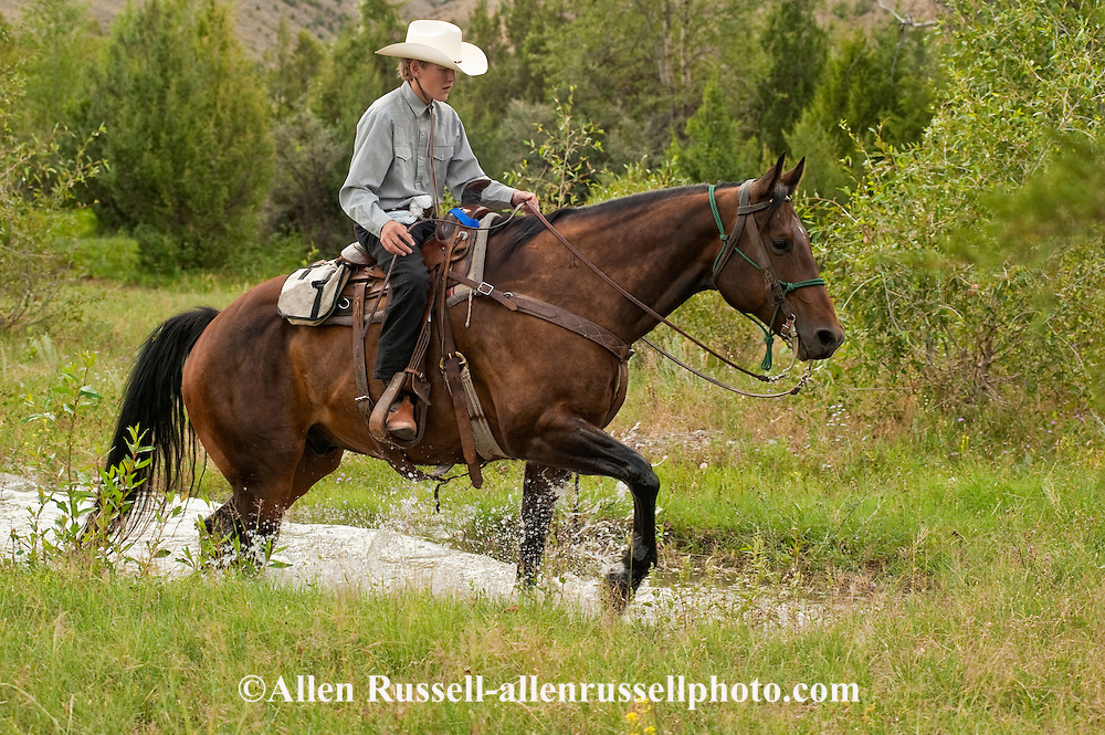 Teenage Boy Trail Rider Crosses Water On Quarter Horse In
